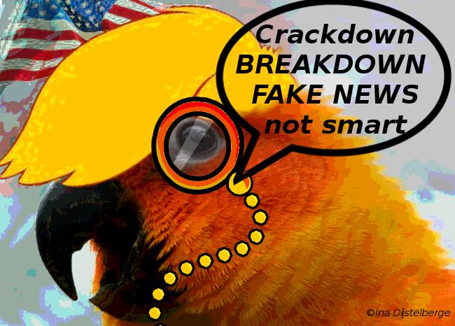 orange parrot t 11