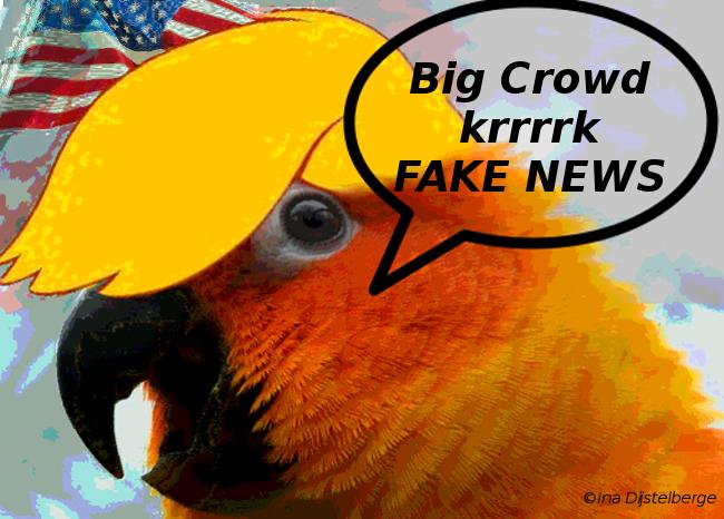 orange parrot t 12