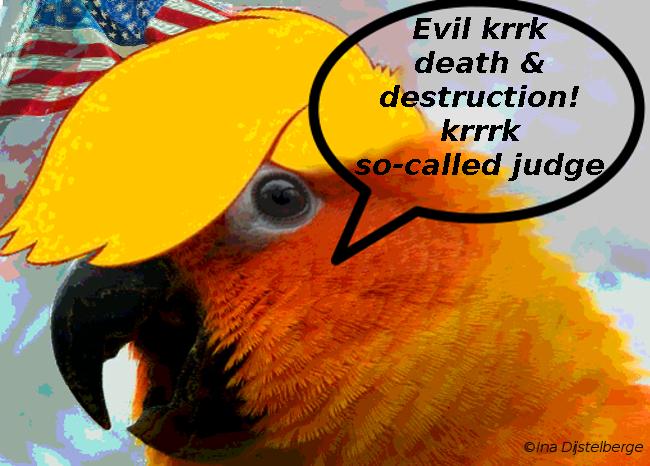 orange parrot evil, so-called judge