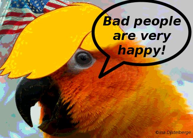 orange parrot t 4
